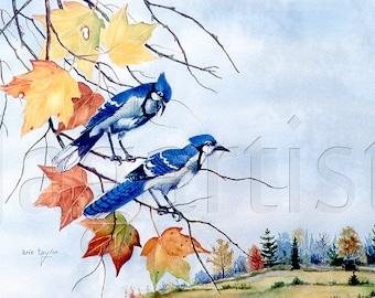 Blue Jays Watercolor Autumn Print, Wall Decor, Arie Taylor. Still Life Art, Outdoor Art