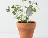 Parsley plantable paper herb kit