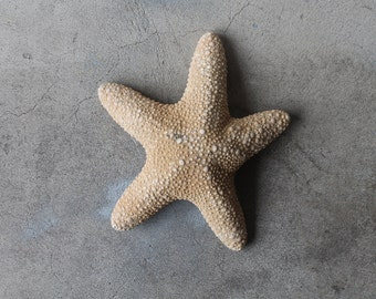 Adorable Beefy Dancing Vintage Starfish, Nautical Beach House Rustic Primitive