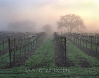 Vineyard Photo, Fog Photo, Vines in Winter Landscape Photograph Foggy Morning