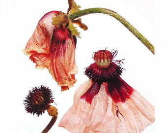 Paisley Hybrid Lily White Innocence Single Red Peony by Irving Penn 1980s Museum Book Art Page Tender Relaxing Floral Still Life Photography