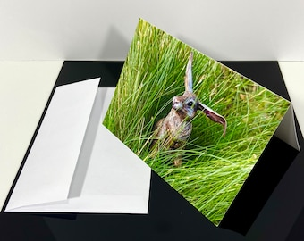 Bunny Greeting Card, Wing Ear Rabbit, Wild Hare, 5x7 inch Landscape or Horizontal Original OOAK Art Card