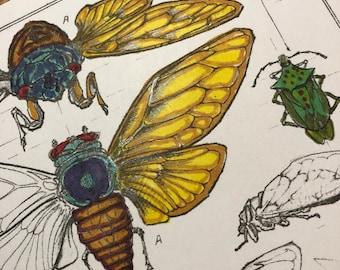 Brood X Organic COTTON Sateen Fabric Entomology Insects   Locust Cicada approx. 10 x 7.5  Inches Quilting Sewing You Color
