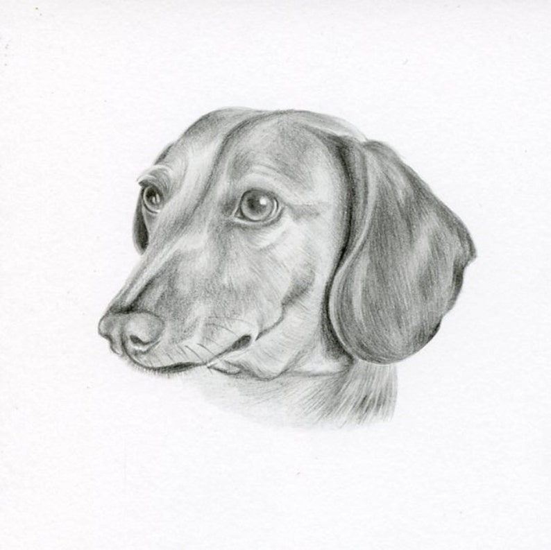 Cat Art size 4 x 4 OR 5 x 5 Custom Pet Drawing Graphite Dog Pencil Drawing Custom Pet Portrait Custom Pencil Drawing Dog Portrait