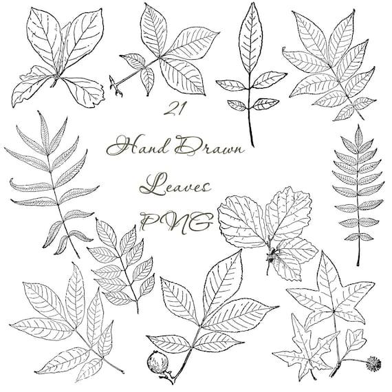Hand Drawn Oak Leaves Digital Package Bundle Printable Nature Line Art Botanical Drawing Download Clipart