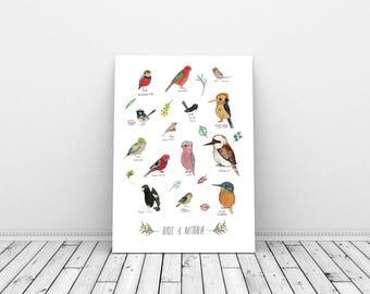 Australian Birds - Giclee Print of a mixture of watercolour Australian birds, sized A4 or A3