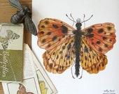 Weavers Fritillary Butterfly Print, giclee art print, watercolor reproduction, lepidoptera