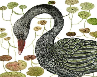 LARGE Black Swan and Water Lily Bog Print, swan illustration, bird art, giclee art print, watercolor print, wall art, 13 x 19