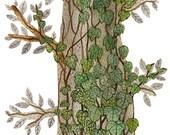 LARGE English Ivy Print, giclee print, nature art, woodland watercolor print, 13 x 19