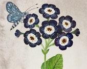 Primula Auricula No. 3, original watercolor painting, botanical painting, floral art