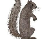 Black Squirrel Print, giclee art print, animal illustration, woodland critters, watercolour, watercolor print