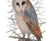 LARGE barn owl print, bird art, watercolor birds,  woodland bird, giclee art print,  large watercolor print, 13 x 19
