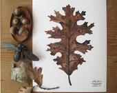 Black Oak Leaf print, botanical print, botanicals, nature art, leaf illustration, oak tree, watercolor print, autumn, fall, watercolor,