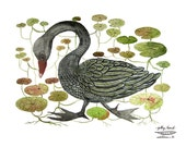 Black Swan and Water Lily Bog Print, bird art, bird print, swan illustration, giclee art print, watercolor print