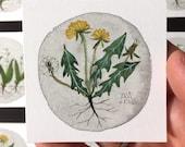 Dandelion No. 3, miniature painting, original watercolor painting, botanical painting, wildflowers