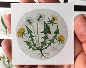 Dandelion No. 5, miniature painting, original watercolor painting, botanical painting, flowers, wildflowers