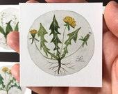 Dandelion No. 2, miniature painting, original watercolor painting, botanical painting, wildflowers