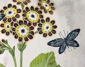 Primula Auricula No. 4, original watercolor painting, botanical painting, floral art