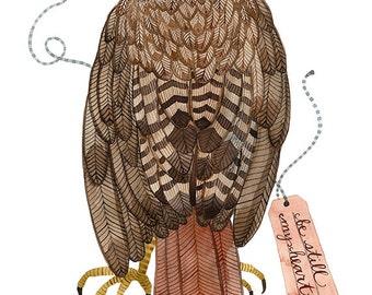red tailed hawk bird specimen print by golly bard | Etsy