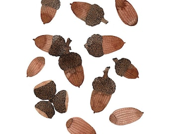 Acorns Print, giclee art print, woodland illustration, nature print, watercolor print, oak tree, autumn, fall