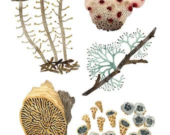 LARGE Fungi Specimens Print, giclee art print, large print, devils tooth, birds nest fungi, oak maze gill, reindeer lichen