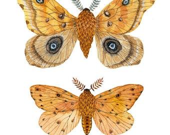 Silk and Sallow Moth Specimens Print,  giclee print, butterflies and moths illustrations, art