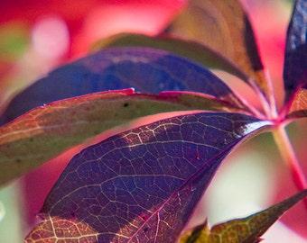 "Leaf Photo - Autumn Art - Nature Photo - Pink Purple - Fall Art - Rainbow Colors - Colorful Art - Home Decor - Wall Art - ""Kaleidoscopic"""