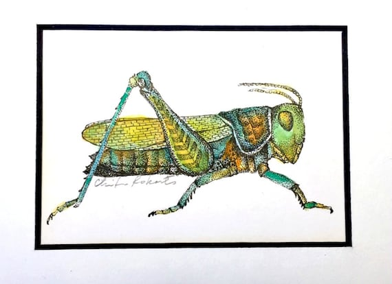 Grasshopper Original Drawing Framed Ink And Watercolor Etsy