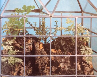 The Family Creative Workshop #20 Featuring Terrariums and Tie Dye 1976