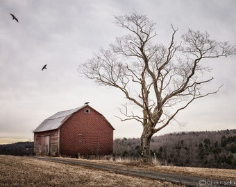 Barn and Tree Photograph, Rustic Landscape Photography, Signed Print and Free Shipping