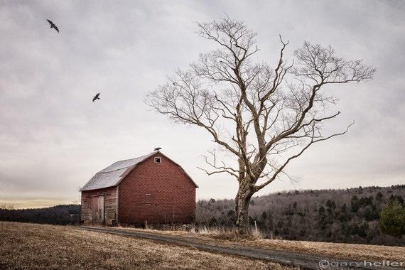 Tree /& Barn 5x5 Original Fine Art Landscape Photographic Print 7