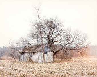 Old forgotten Shed and Tree in a Field, Rustic Charming Country Chic Wall Art