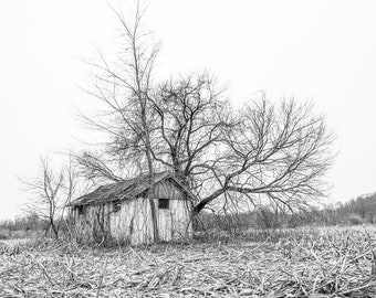 Old Forgotten Shed, Black and White, Trees growing out and Beside the Old Shed in the Vast field