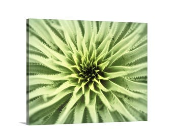 Agave Print, Botanical Art, Agave Art, Green Agave Picture, Agave Photograph, Desert Agave Art, Picture Gift, Nature Photography, Wall Decor