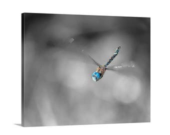 Dragonfly Picture, Dragonfly Print, Black and White, Dragonfly Art, Dragonfly Decor, Dragonfly Photograph, Flying Dragonfly, Dragonfly Gift