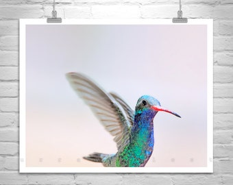 Hummingbird Art Photography, Bird Lover Gift, Hummingbird Picture, Bird Art Print, Hummingbird Decor, Bird Photography, Hummingbird Gift