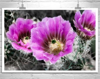 Cactus Flower Art, Magenta Flowers, Flower Picture, Arizona Cactus Art, Desert Flower Art, Flower Photograph, Cactus Blossoms, Tucson Gift