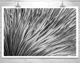 Desert Agave Picture, Black and White Nature Photography, Agave Art, Agave Print, Botanical Print, Arizona Agave Photograph, Arizona Gift