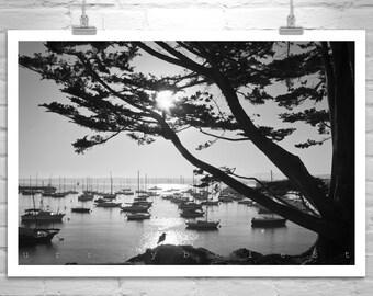 Sailboat Art, Monterey Bay California Art, Sailing Art Print, Monterey Gift, Monterey Cypress Tree Art, Black and White, Tree Silhouette Art