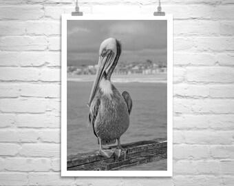 Pelican Art, Black and White, Pelican Print, Sea Bird Photograph, Pelican Picture, Pelican Gift, Gift for Bird Lover, Seabird Photo Print