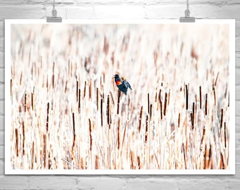 Black Bird Art, Red Winged Black Bird Picture, Bird Photography, Cattails Photo, Wetlands Art, Bird Watcher Gift, Neutral Tones, Earth Tones