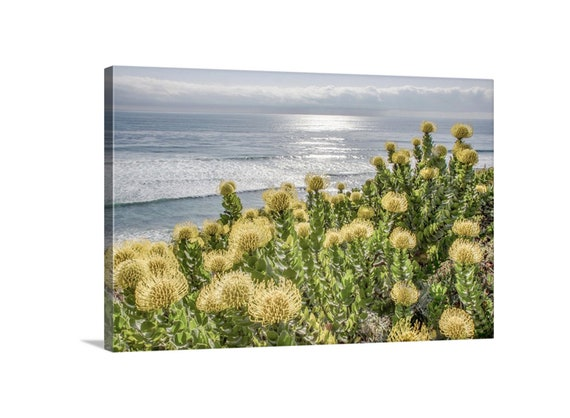 San Diego set of 2 Large 10 x 16  Ocean beach  and woody wall decor wood plaque print.