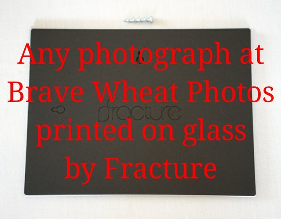 Your choice of any image in Brave Wheat Photography printed on glass by Fracture™