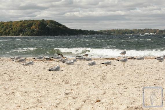 """Flock of Seagulls,"" Lloyd Harbor, Long Island, New York, 2015."