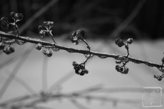 """Icy Weed,"" Huntington, New York, 2015."