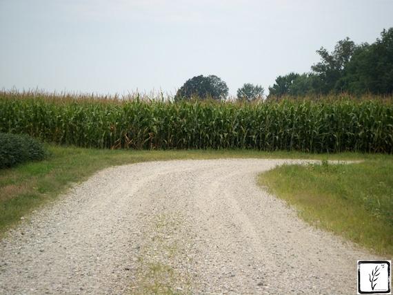 """""""Hoosier Driveway,"""" Rural Indiana, 2011."""