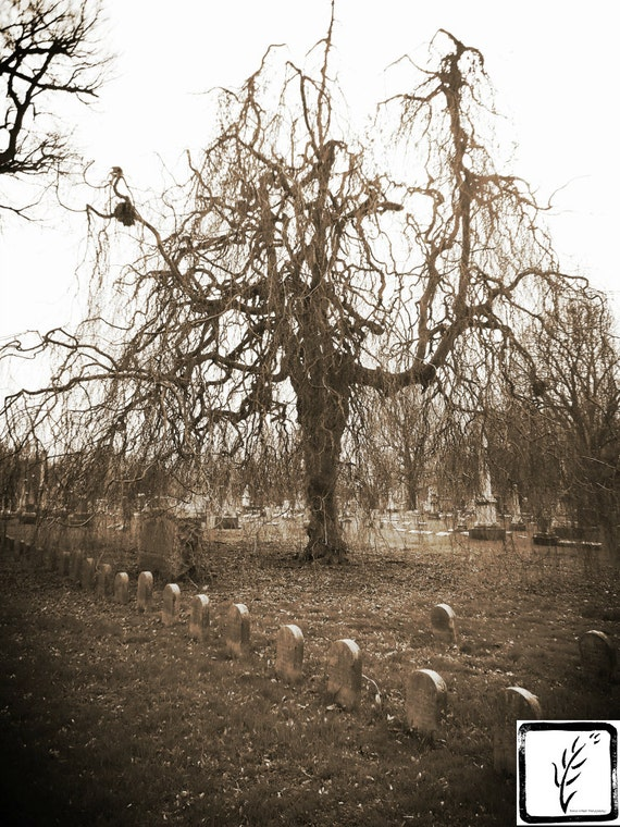 """""""Orphelins Tree,"""" Central Presbyterian Orphans Asylum section, Crown Hill Cemetery, Indianapolis, Indiana, 2013."""