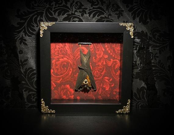 7x7 Bat Shadowbox - Taxidermy Bat - Gothic Gift - Bat Gift - Oddities -  Gothic Decoration - Bat Decoration