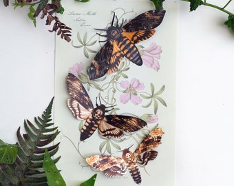 """Realistic Paper Moth, Double-sided, Butterfly Paper-cut Craft Cutouts - """"Memento Mori"""" Death's-Head Hawkmoth - 3 Piece Set"""