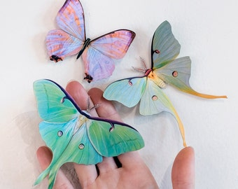 """Realistic Paper Luna Moth, Double-sided, Faux Butterfly Papercut Craft Cutouts - """"Spring"""" Luna Moths and Morpho Butterflies 3 Piece Set"""